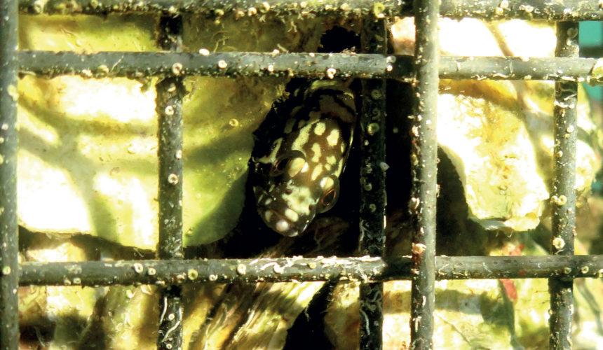 remy-dubas-ecocean-(2)
